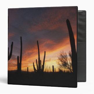 saguaro cacti, Carnegiea gigantea, after Binder
