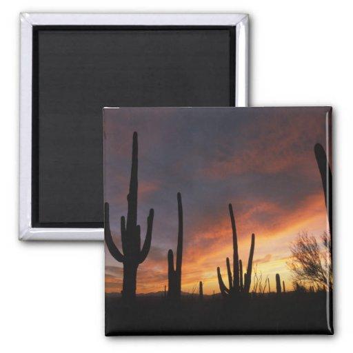 saguaro cacti, Carnegiea gigantea, after Fridge Magnet