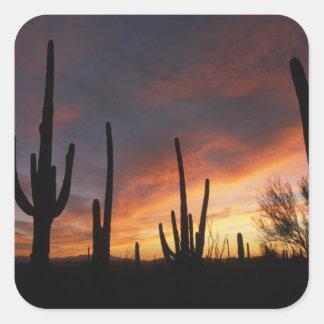 saguaro cacti, Carnegiea gigantea, after Square Sticker