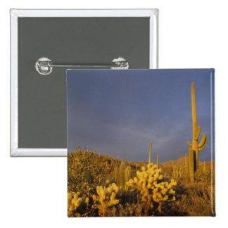 saguaro cacti, Carnegiea gigantea, and teddy 2 Inch Square Button