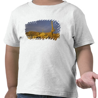 saguaro cacti, Carnegiea gigantea, and teddy T-shirts