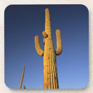 Saguaro cacti drink coasters