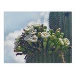 Saguaro cacti postcard