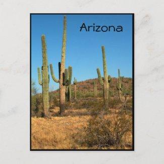 Saguaro cactus, Arizona - postcard postcard