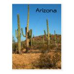 Saguaro cactus, Arizona - postcard