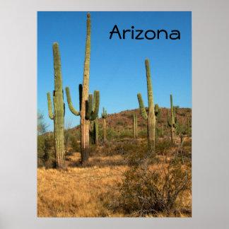 Saguaro cactus, Arizona - poster