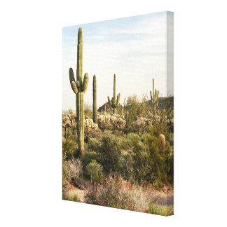 Saguaro Cactus, Arizona,USA Canvas Print