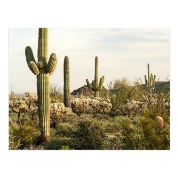 USA Themed Saguaro Cactus, Arizona,USA Postcard