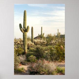 Saguaro Cactus, Arizona,USA Poster