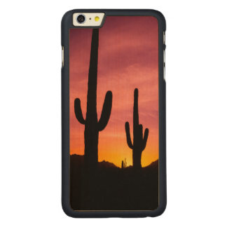 Saguaro cactus at sunrise, Arizona Carved Maple iPhone 6 Plus Case