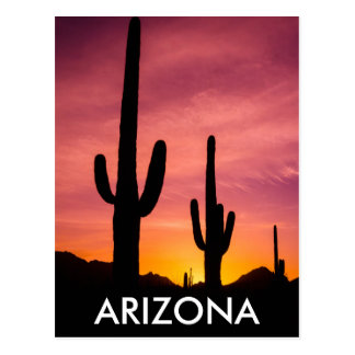 Saguaro cactus at sunrise, Arizona Postcard