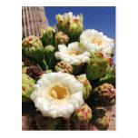 Saguaro Cactus Blossom - Arizona State Flower Postcards