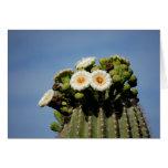 Saguaro Cactus Blossoms Greeting Card