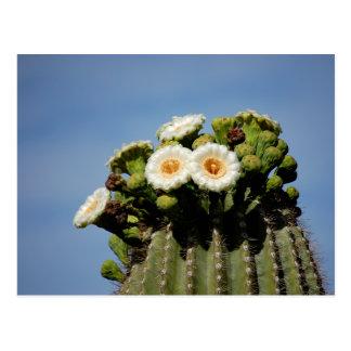 Saguaro Cactus Blossoms Post Card