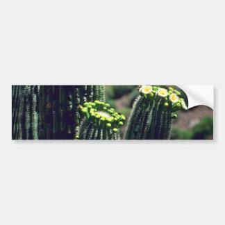 Saguaro Cactus Bouquet flowers Bumper Sticker