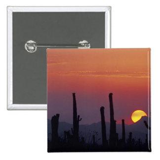 Saguaro Cactus Carnegiea gigantea), Sunset, 2 Inch Square Button