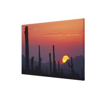 Saguaro Cactus Carnegiea gigantea), Sunset, Canvas Print