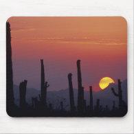 Saguaro Cactus Carnegiea gigantea), Sunset, Mouse Pad
