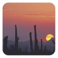 Saguaro Cactus Carnegiea gigantea), Sunset, Sticker