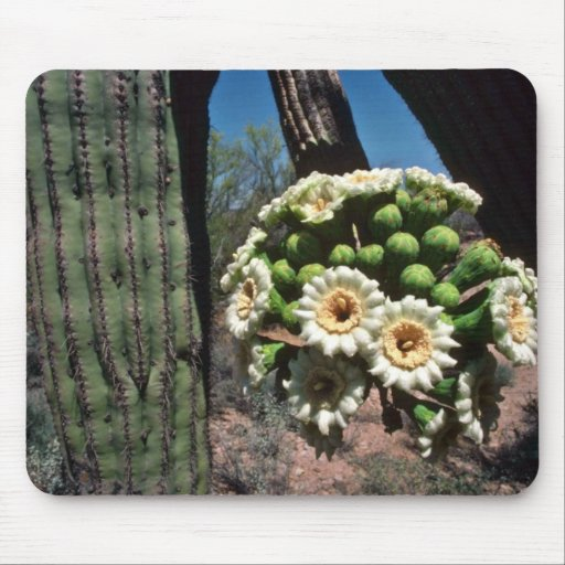 Saguaro Cactus flowers Mouse Pad