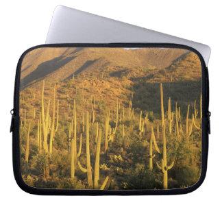 Saguaro cactus in Saguaro National Park near Computer Sleeve