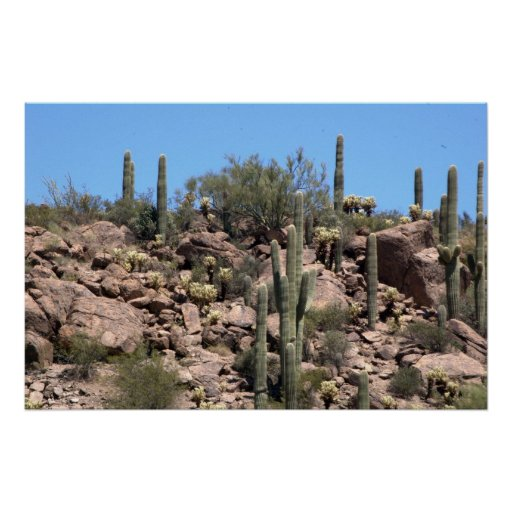 Saguaro cactus in Sonoran Desert, Arizona Poster