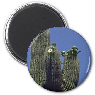 Saguaro Cactus Magnets