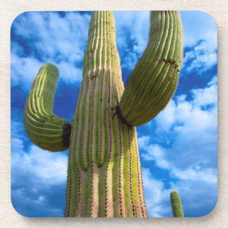 Saguaro cactus portrait, Arizona Beverage Coaster