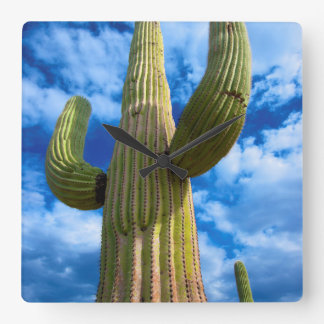 Saguaro cactus portrait, Arizona Square Wall Clock