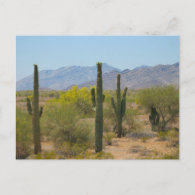 Saguaro Cactus Postcards