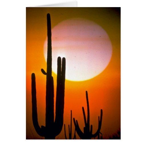 Saguaro cactus, Sonoran Desert, U.S.A. Desert Greeting Cards