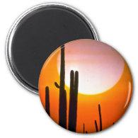 Saguaro cactus, Sonoran Desert, U.S.A. Desert Magnets