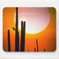 Saguaro cactus, Sonoran Desert, U.S.A. Desert Mousepads