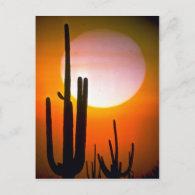 Saguaro cactus, Sonoran Desert, U.S.A. Desert Postcards