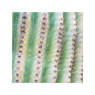 Saguaro Closeup | Canvas Print