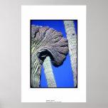 Saguaro con cresta poster