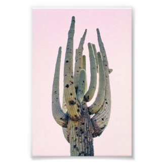 Saguaro Cutout | Photo Print