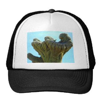 saguaro deformado cactus.jpg gorro