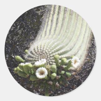 Saguaro floreciente pegatina redonda