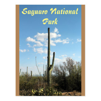 Saguaro National Park, Tuscon Arizona Postcard