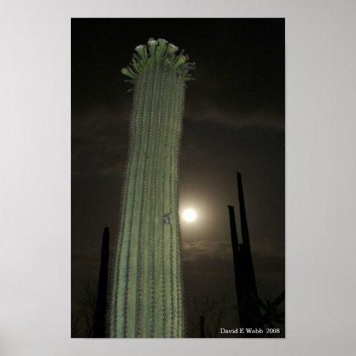 Saguaro por el claro de luna 1 póster