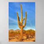 Saguaro Posters