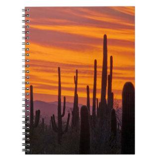 Saguaro, puesta del sol, parque nacional de note book