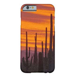 Saguaro, puesta del sol, parque nacional de funda de iPhone 6 barely there
