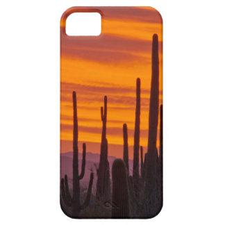 Saguaro, puesta del sol, parque nacional de iPhone 5 carcasas