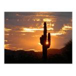 Saguaro Rays Postcard