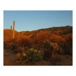 Saguaro Sunset I Arizona Desert Landscape Photo Print