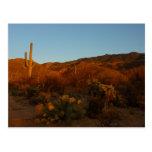 Saguaro Sunset I Arizona Desert Landscape Postcard