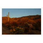 Saguaro Sunset I Arizona Desert Landscape Poster