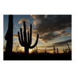Saguaro Sunset II Arizona Desert Landscape Perfect Poster